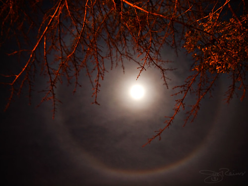 moon tree clouds rainbow branches halo olympus e30 icecrystals circleoflight zd 1454mm