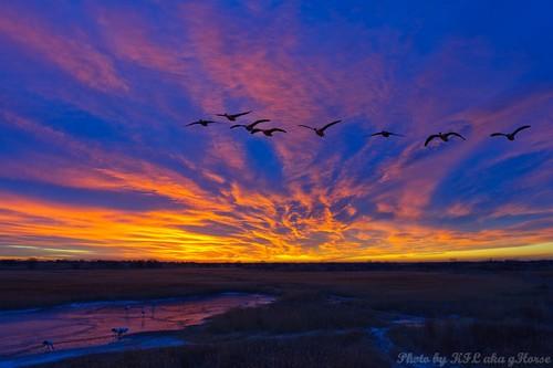 blue sunset orange cloud birds jilin 吉林 鸟 xianghoi 向海
