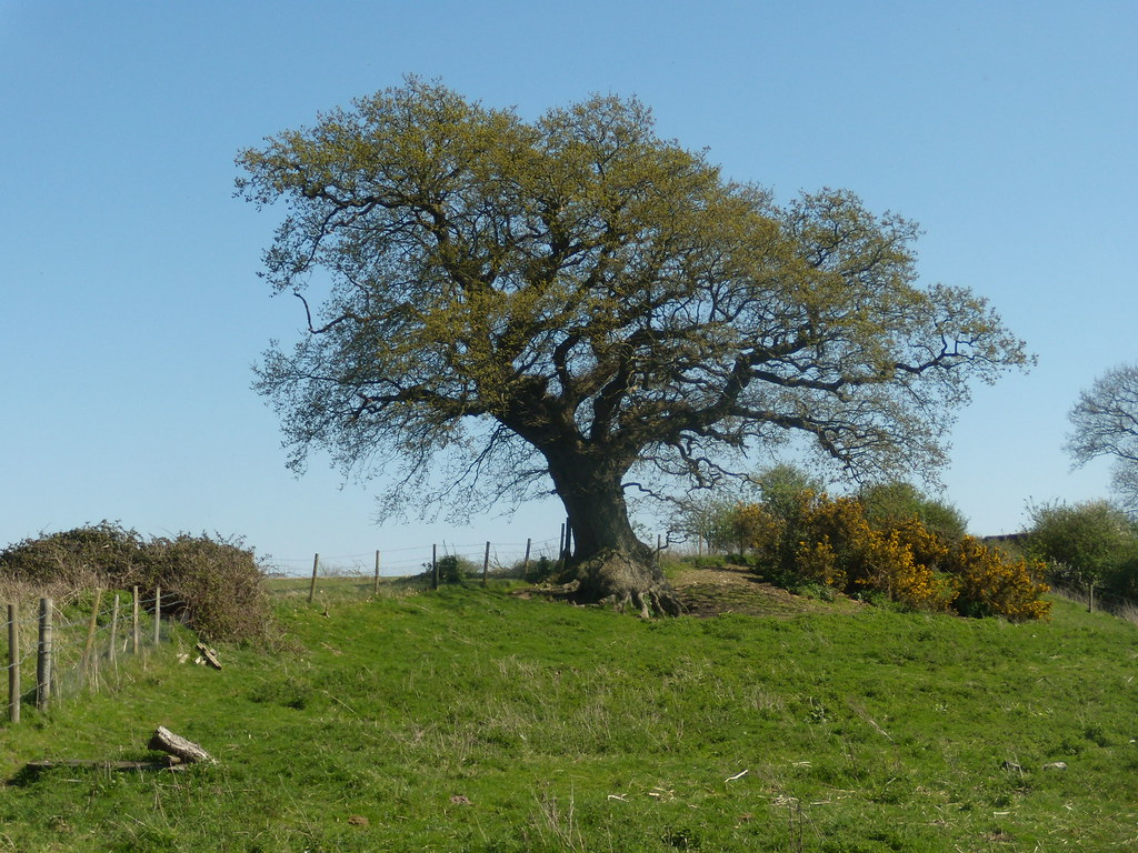 Tree Pulborough to Amberley