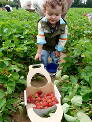20090618 strawberries - 16