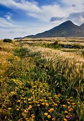 Spain - Cabo de Gata: Spanish Spring