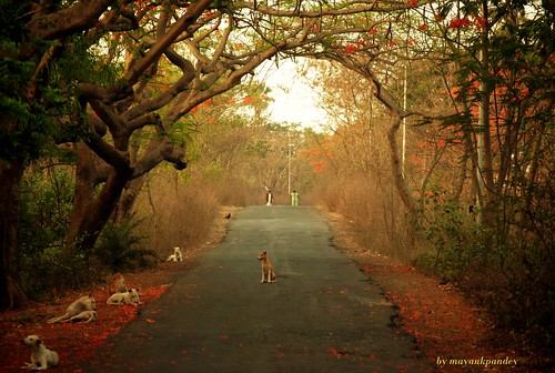 color nature landscapes nikon mumbai