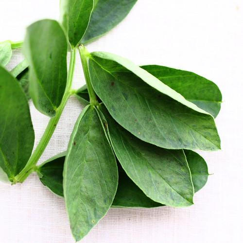 Fava Greens