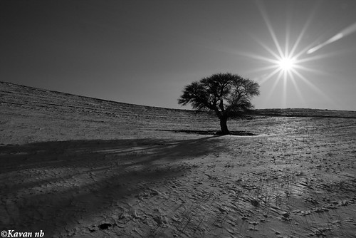 winter sunset shadow bw sun snow tree grass sunshine canon landscape blackwhite iran horizon wide sigma flare iranian 1770 kurdistan sanandaj kavan kordestan 400d