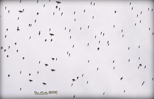 bird flying valdosta flock overhead grandbay lowndes d80
