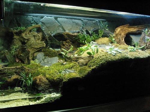 Best desert vivariums dendroboard for Small pond setup