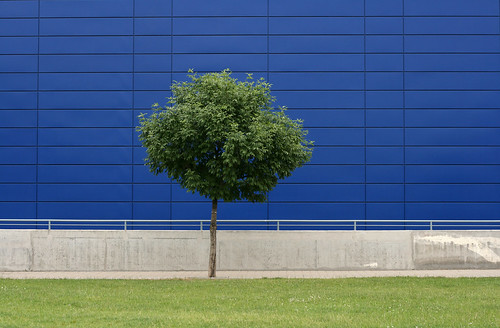 life street city blue urban detail building tree green nature grass leaves metal wall modern concrete 50mm grey daylight stand spring hungary alone exterior place outdoor background budapest nobody foliage explore simplicity lush minimalism simple exploration minimalist individual revisited wallscape sonofsteppe pusztafia foliature urbanlifeoftrees