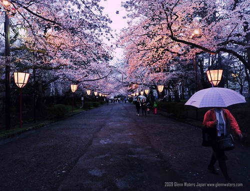 Sakura Night (Hirosaki Japan). © Glenn Waters.   (Explored)  Over 5,500 visits to this photo.  Thank you.