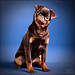 Rambo The Puppie II by Staale N
