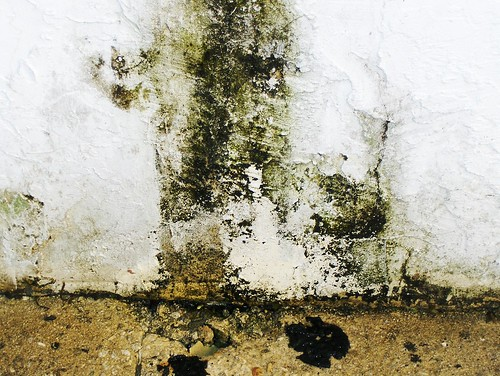 Mould can lead to health issues when left unchecked.