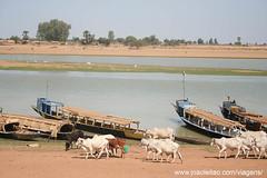 Vacas e barcos no rio em Mopti