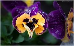 - feminine flower -