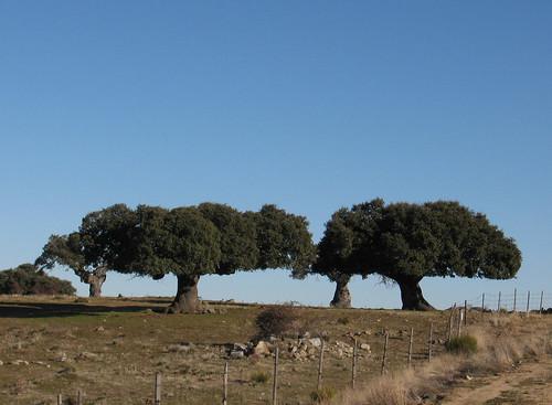 Castilla y Leon 015
