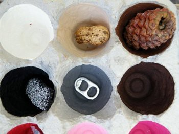 Egg Carton Curiosities