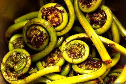 macro fiddlehead ferns    MG 3601