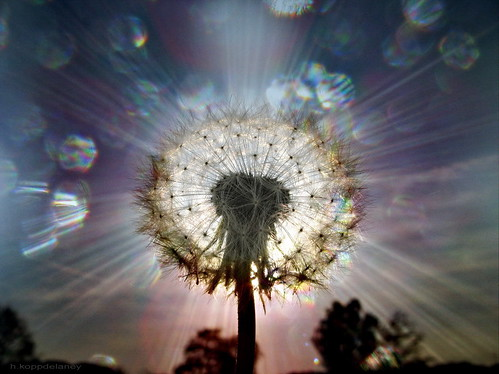 Wisdom - Seeds of Light by h.koppdelaney