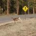 Wrong Sign, Deer or Pedestrian Crossing?