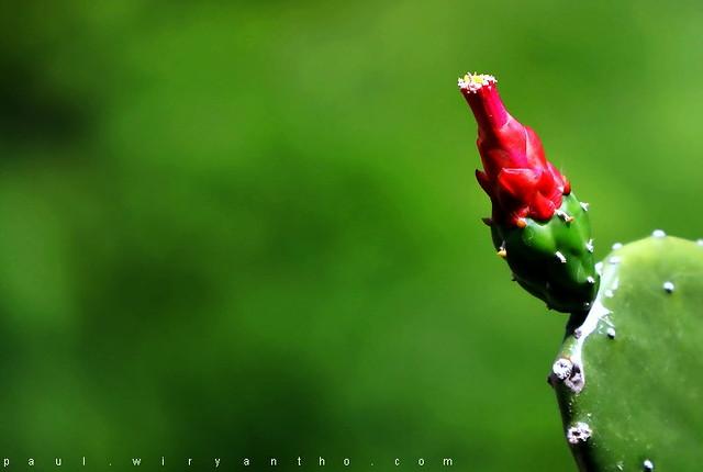 Selamat Pagi Cinta | Flickr - Photo Sharing!