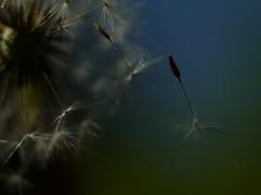 Leica Macro-Elmarit-R 60mm