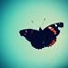 7:100 Butterfly Wings by Mamma Tortilla