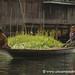Rowing a Boat - Inle Lake, Burma