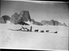 Man with dogs and dog sled n.d.