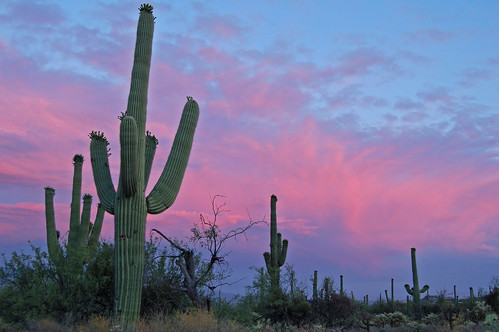 Saguaro Sunset 38/365