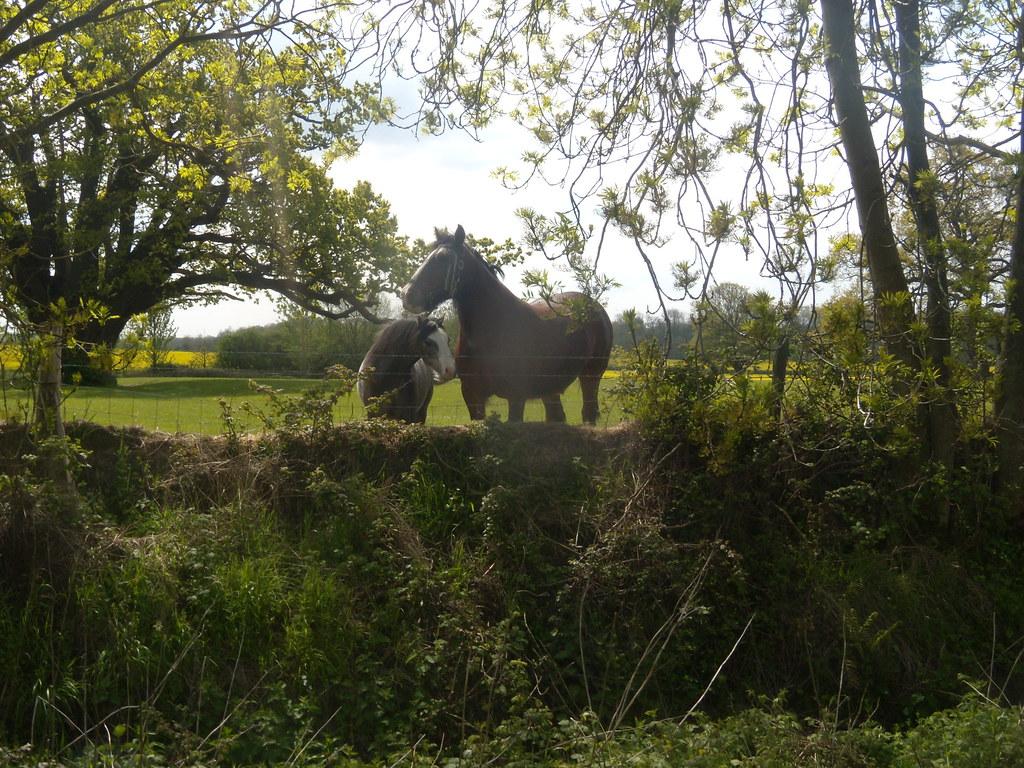 Horses Pluckley Circular