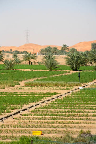 agriculture in the uae Full-text paper (pdf): food security in the united arab emirates (uae): the  great competition between the agricultural and forestry sector on irrigation.