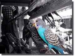Kurdistan  Birds Poster