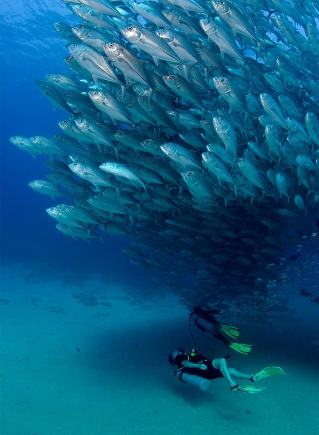 fish-tornado-004