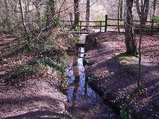 Decoy Country Park, Devon