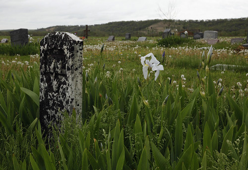 flowers grave canon landscape headstone cemetary kansas prairie cpimages