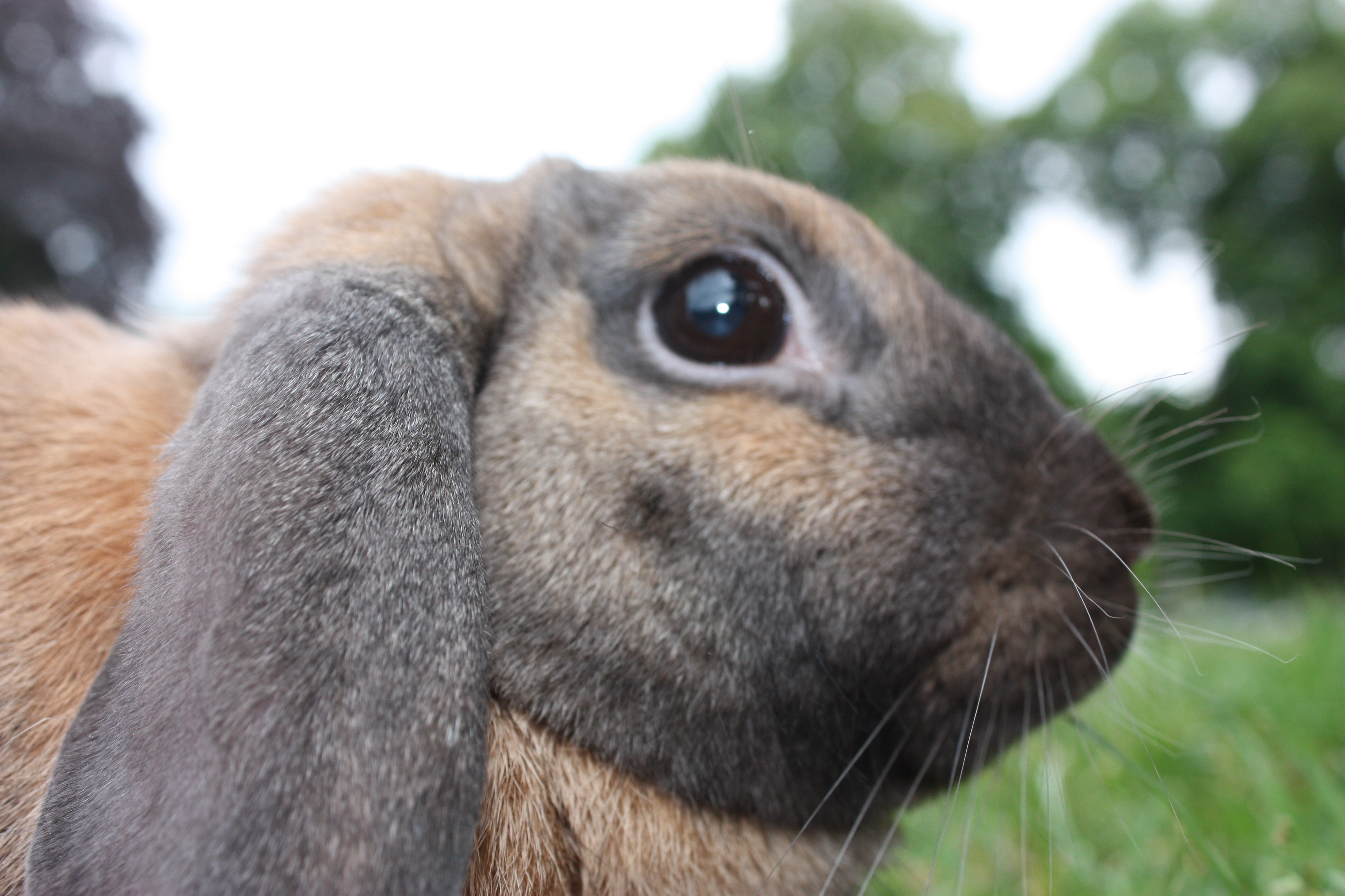 Lapin b lier nain parc ext rieur gros plan flickr for Parc a lapin exterieur