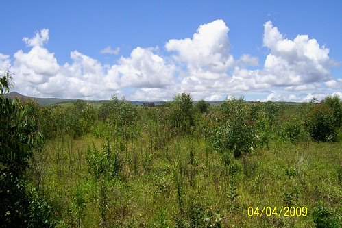 tanzania 2009 sumbawanga agroforestry treesftf rukwa kaeso
