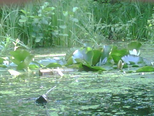 Toujours le jardin naturel à Paris 20ème... | Flickr - Photo Sharing!