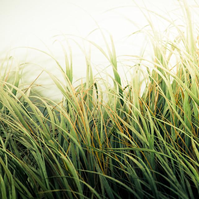 Beach Grass Texture | Flickr - Photo Sharing!