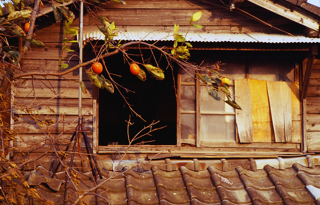 Old house with persimmons, Yatsushiro 八代