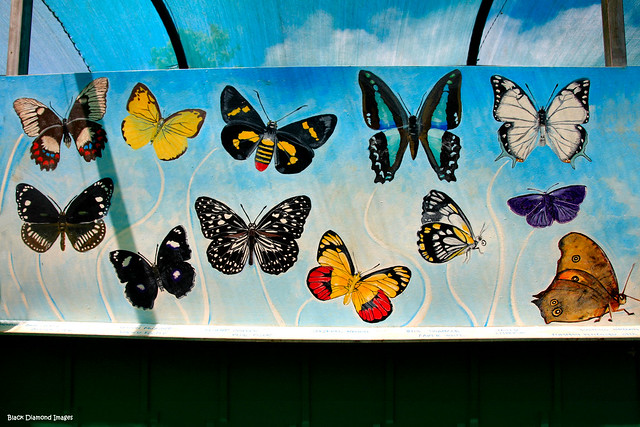 Butterfly Species Mural - Butterfly Habitat - Chillingham Community Centre