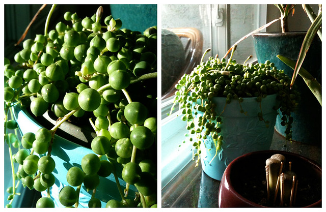 my very own string of pearls