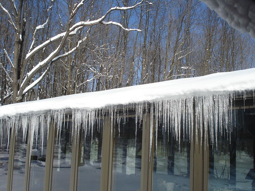 Pretty little icicles all in a row....