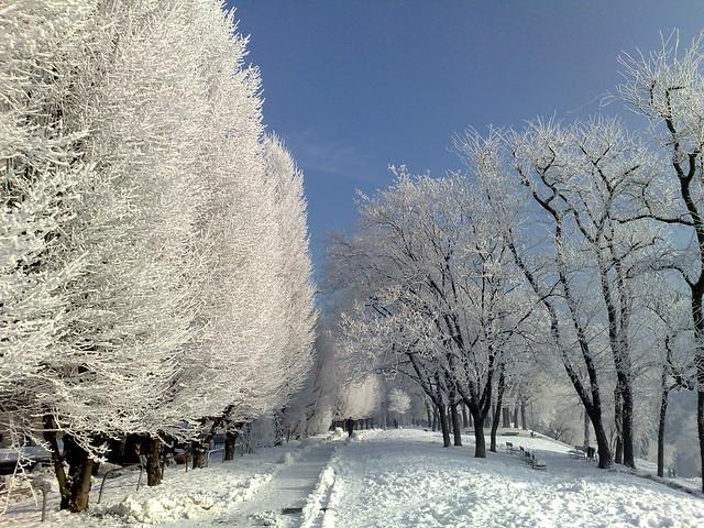 Iced Torino 2