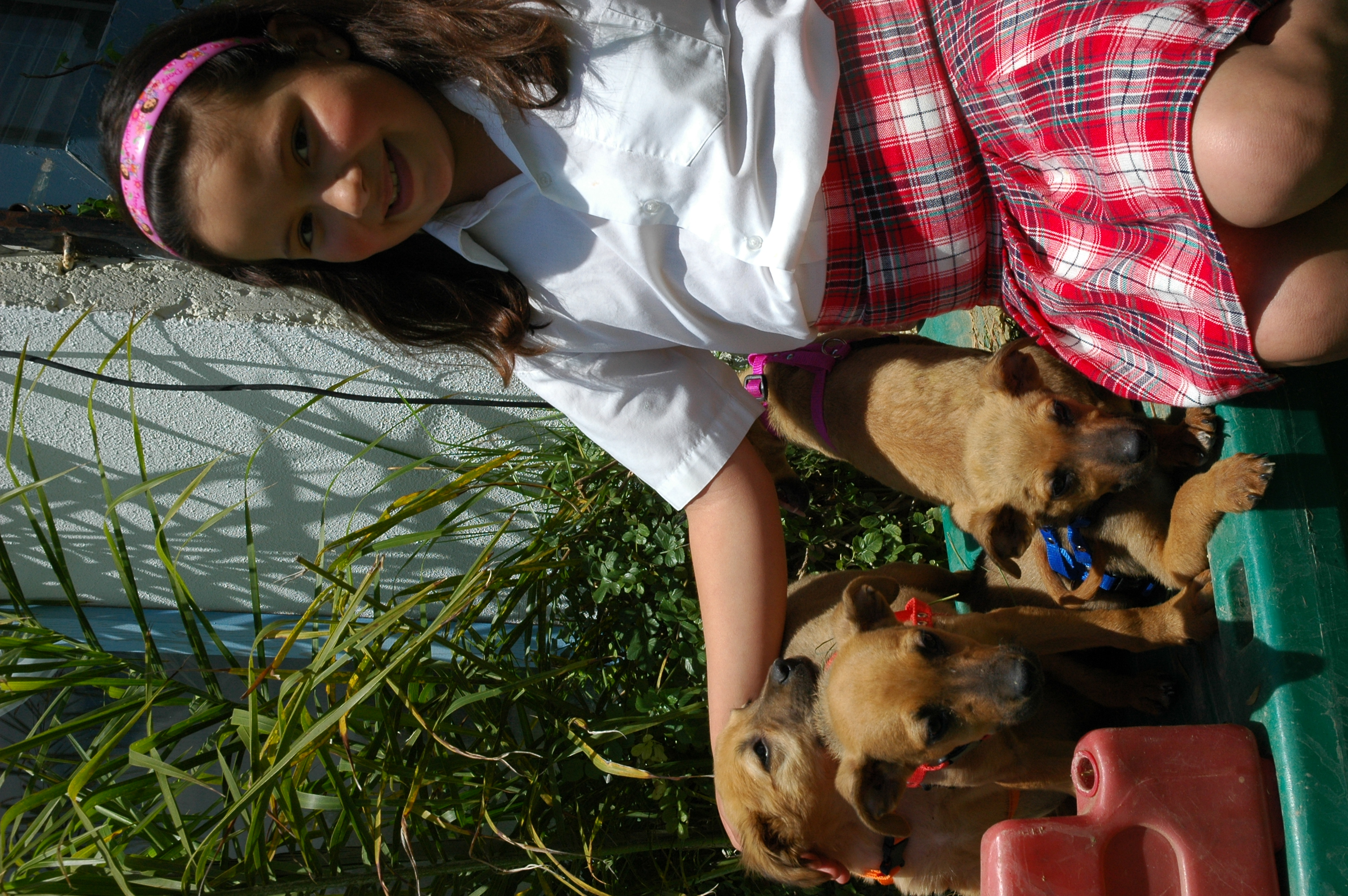 Posh Pet Day Spa Yelp