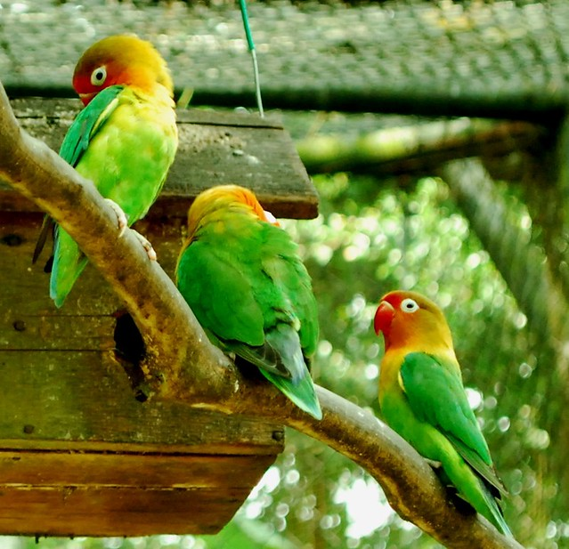 Burung Indonesia | Conserving Nature With You