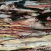 Un océan de pâte à modeler (Texture tronc - Trunk texture)