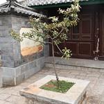 Foto: Michelia yunnanensis