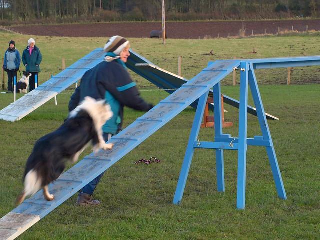 Kairyn Dog Training