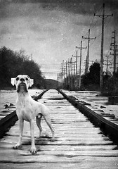 My big man on the tracks