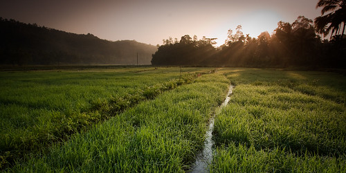 sunrise canon landscape eos stream srilanka paddyfield efs1022mmf3545usm 450d lpagriculture