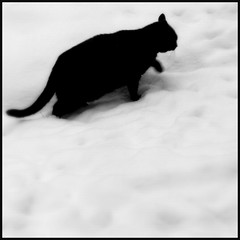 the snow & the unknown cat